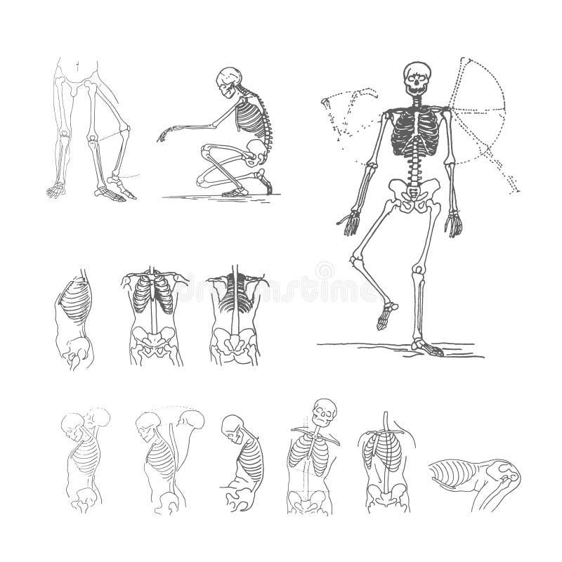 Concetto dell'illustrazione di vettore dello scheletro Il nero su fondo bianco illustrazione vettoriale