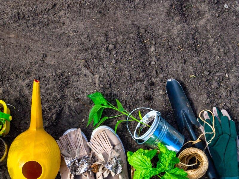 concetto della molla, strumenti di giardinaggio per il giardinaggio, stivali e piantine, annaffiatoio, lavoro stagionale del giar fotografia stock