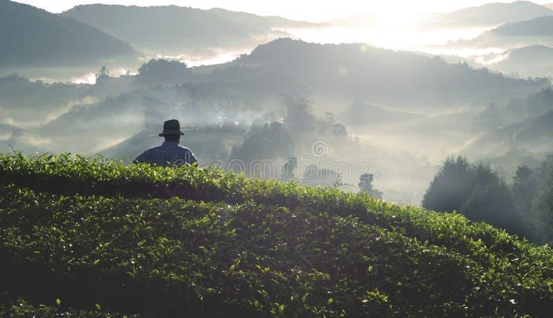 Concetto della montagna del tè del raccolto dell'agricoltore di agricoltura fotografia stock