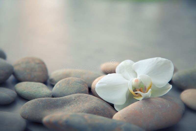 Concetto della stazione termale con le pietre del basalto e l'orchidea bianca immagini stock libere da diritti