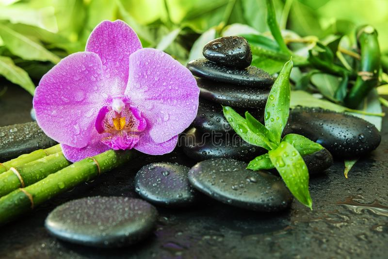 Concetto della stazione termale con le pietre di zen, il fiore dell'orchidea ed il bamb? fotografie stock