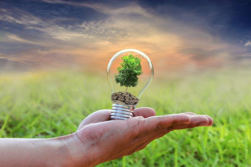 Concetto della terra di risparmi dell'albero della lampadina fotografia stock libera da diritti
