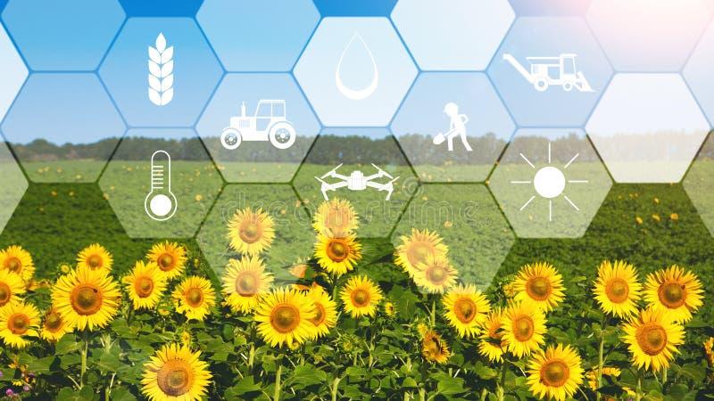 Concetto di agricoltura astuta e di tecnologia moderna immagini stock libere da diritti