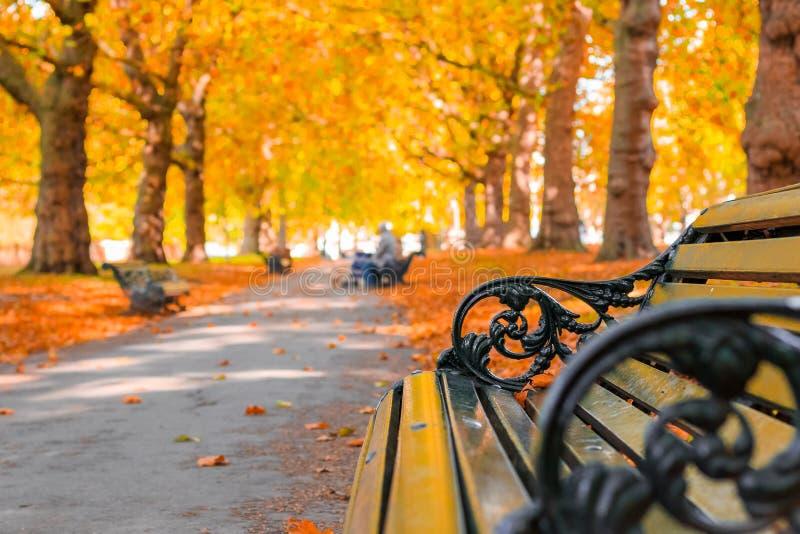 Concetto di autunno, banchi su un viale allineato con gli alberi in Green Park fotografia stock
