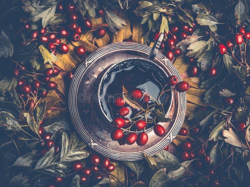 Concetto di autunno Tazza di tè sano con le bacche rosse di caduta decorate con le foglie sul fondo di legno rustico scuro della  immagine stock libera da diritti