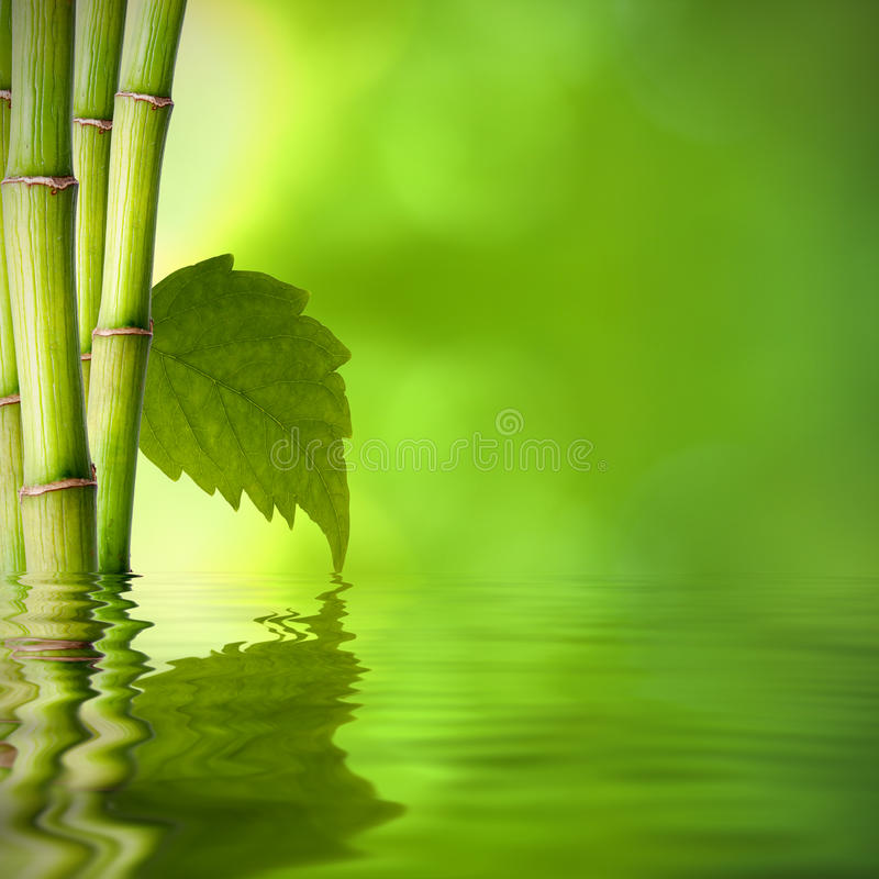 Concetto di bambù della stazione termale fotografia stock