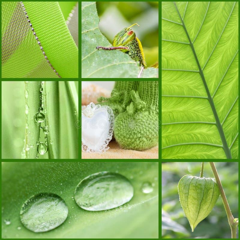 Concetto di colore: collage verde con le piante e gli oggetti fotografia stock