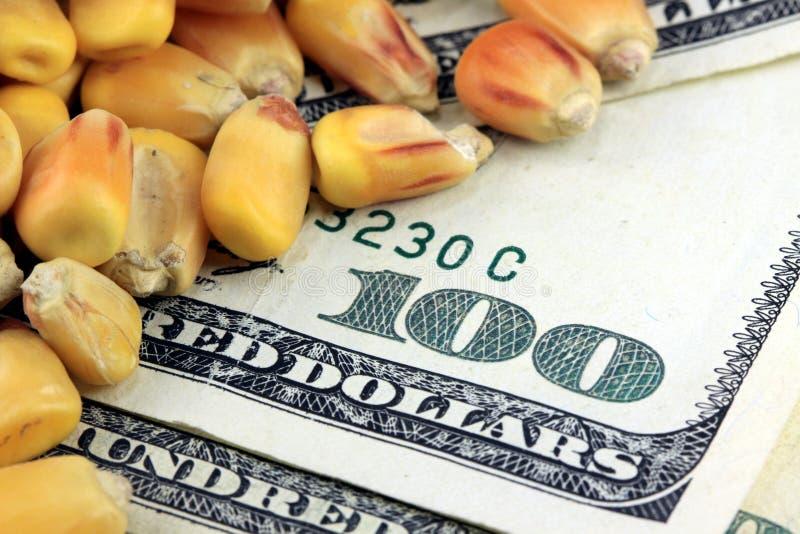 Concetto di commercio dei prodotti - banconota in dollari di valuta cento degli Stati Uniti con cereale giallo immagine stock