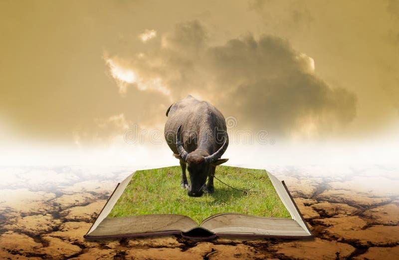Concetto di conoscenza di agricoltura, Buffalo sul libro aperto con terra asciutta immagine stock