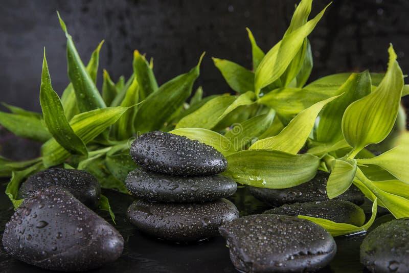 Concetto di cura del corpo e della stazione termale: gambi di bambù verdi e pietre nere di massaggio con le gocce di acqua fotografia stock libera da diritti