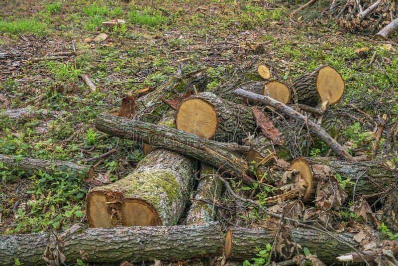 Concetto di disboscamento Ceppi, ceppi e rami dell'albero dopo la foresta di taglio fotografie stock