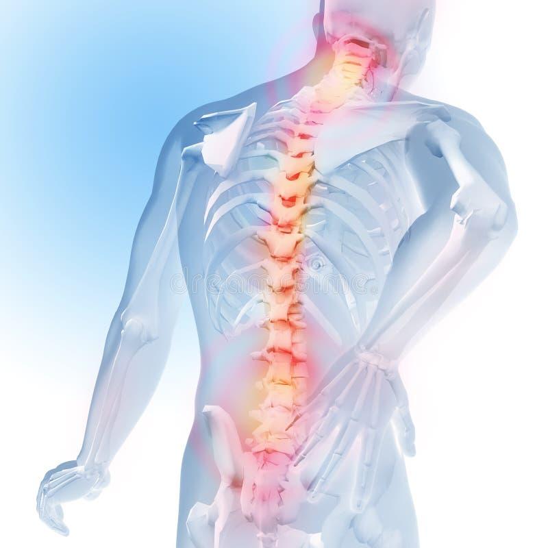 Concetto di dolore della spina dorsale Trasparenza dello scheletro e del corpo illustrazione anatomica medica 3d illustrazione vettoriale