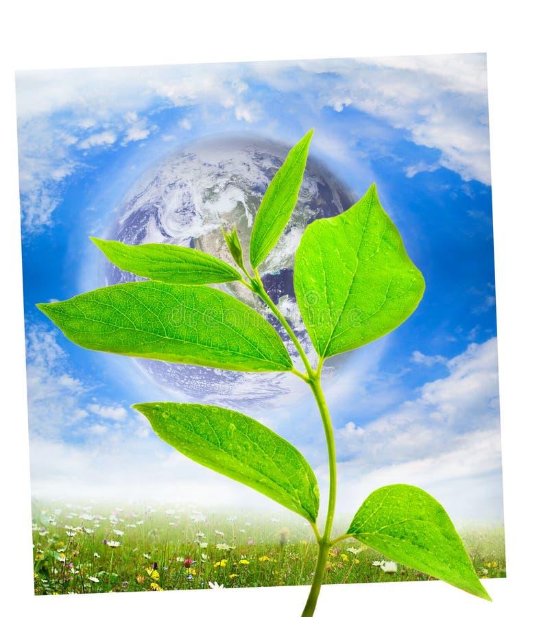 Concetto di ecologia fotografia stock
