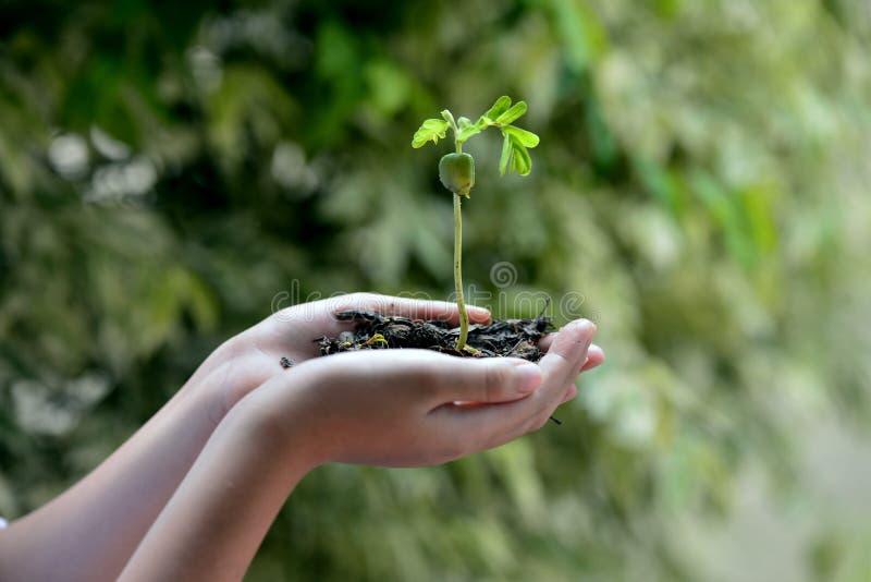 Concetto di ecologia fotografie stock libere da diritti
