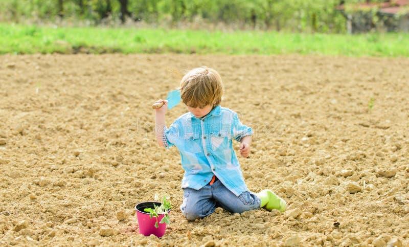 Concetto di giardinaggio Bambino divertendosi con poche pala e pianta in vaso Piantando nel campo Piantatura dei semenzali poco fotografia stock