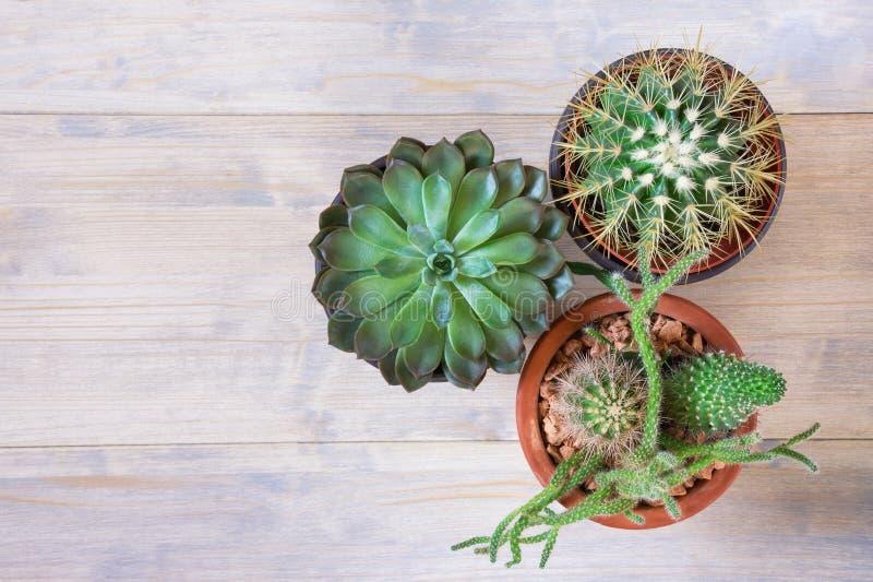 Concetto di hobby Tipi differenti di cactus in vasi da fiori Disposizione piana, fondo rustico bianco, spazio libero per testo immagine stock