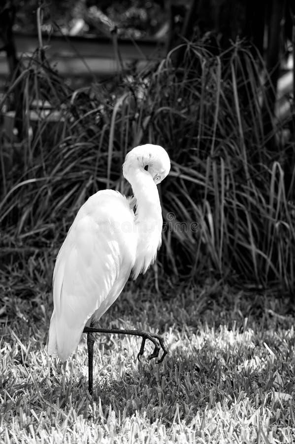 Concetto di libertà e di ornitologia immagine stock libera da diritti