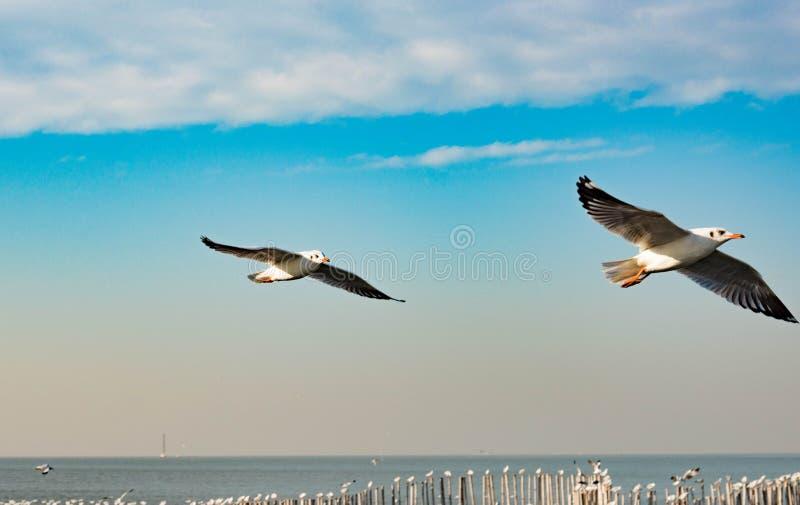 Concetto di libertà, un gabbiano di due bianchi che sale nel cielo blu nel MI fotografie stock libere da diritti