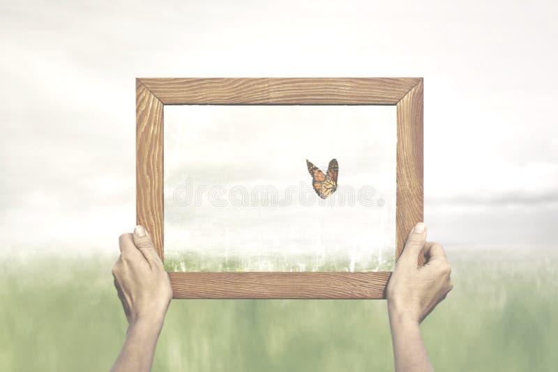Concetto di libertà di una farfalla che sfugge da un collettore esperto immagine stock libera da diritti