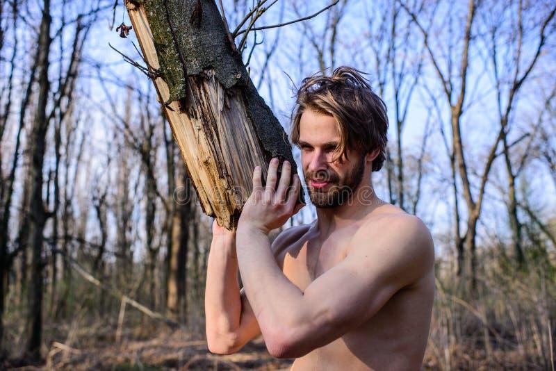 Concetto di mascolinità Tipo attraente brutale dell'uomo il forte che raccoglie il legno nel boscaiolo sexy brutale dell'uomo del fotografia stock libera da diritti