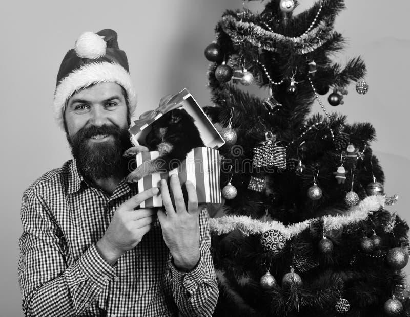 Concetto di Natale e del partito Vacanza invernale di anno del cane e natale fotografia stock libera da diritti