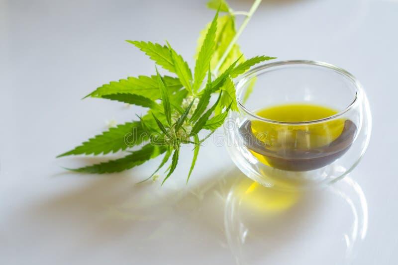 Concetto di prodotti della canapa Olio di semi della cannabis e pianta verde immagini stock