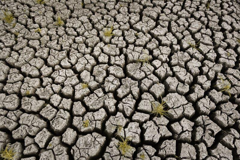 Concetto di riscaldamento globale, caldo e del clima secco, clima del cambiamento, terra per le colture perenni fotografia stock libera da diritti