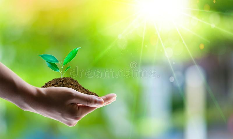 Concetto di risparmio di energia con terra verde e la piantagione di alberi sui volontari fotografia stock