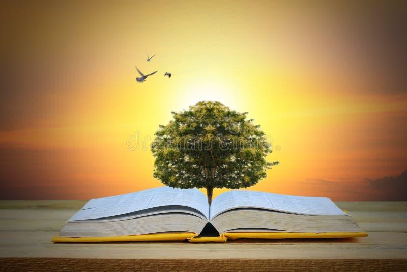 Concetto di saggezza, di istruzione e di conoscenza, albero che cresce sul libro fotografia stock libera da diritti