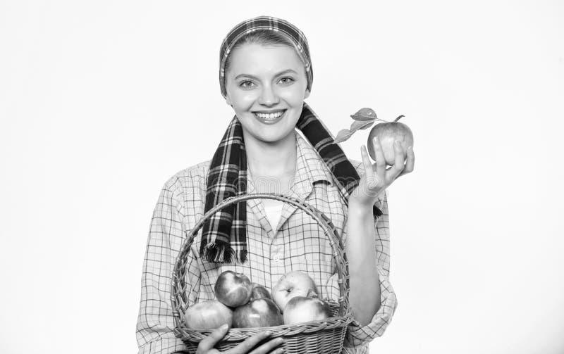 Concetto di tempo di raccolta Il paesano allegro della donna porta il canestro con i frutti naturali Giardiniere dell'agricoltore fotografie stock