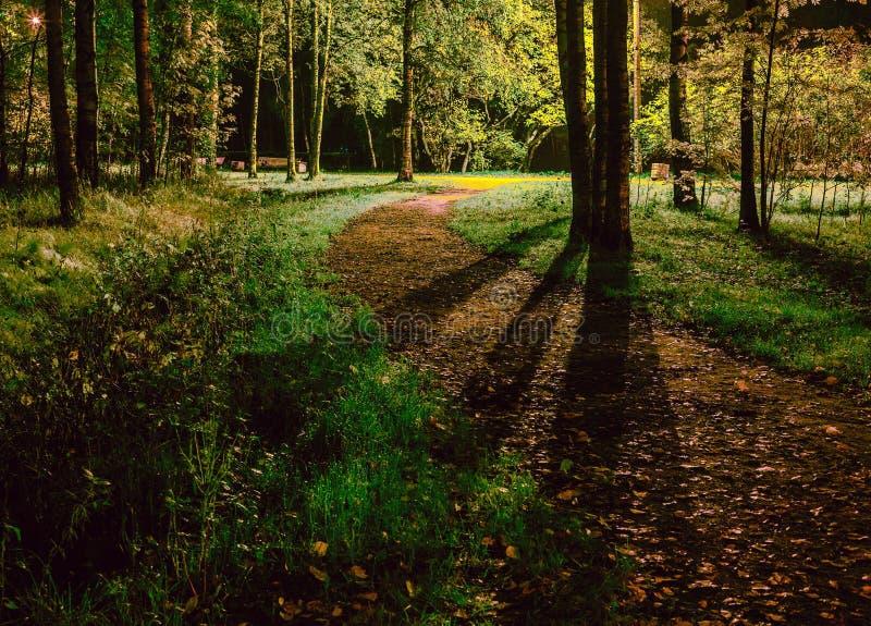 Concetto: direzione del percorso da buio alla strada luminosa Sentiero per pedoni del paesaggio di notte nel parco fotografia stock