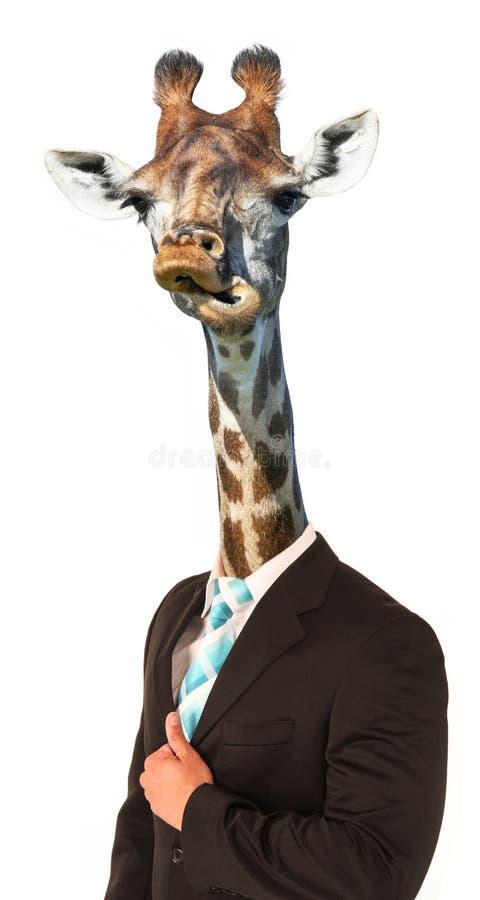 Concetto divertente dell'uomo della giraffa fotografia stock libera da diritti
