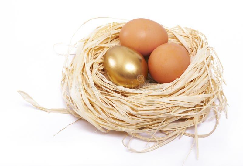 Concetto dorato di finanze dell'uovo fotografia stock libera da diritti