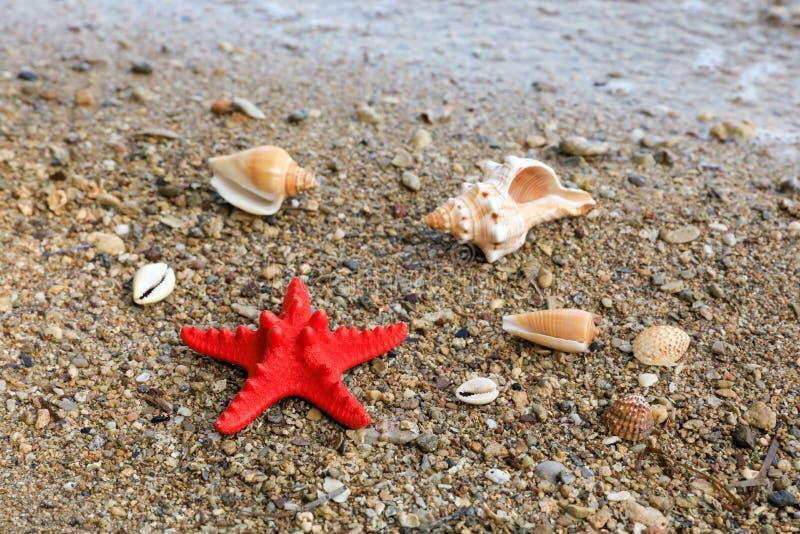 Concetto felice di vacanza di umore di estate delle conchiglie della spiaggia immagini stock libere da diritti