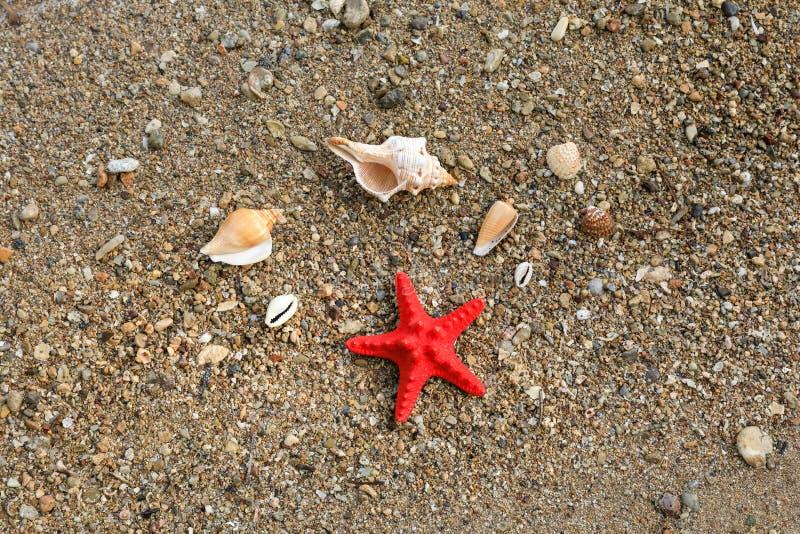 Concetto felice di vacanza di umore di estate delle conchiglie della spiaggia immagini stock