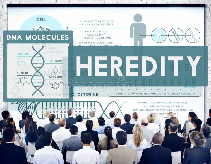 Concetto molecolare di scienza del cromosoma di biologia di eredità immagini stock libere da diritti