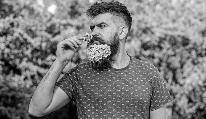 Concetto naturale dell'aroma Pantaloni a vita bassa con il mazzo delle margherite in barba L'uomo con la barba ed i baffi sul fro immagini stock