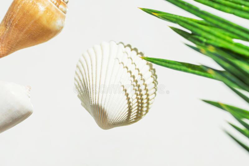 Concetto nautico creativo di estate Belle conchiglie della foglia di palma verde di colori differenti di forme su fondo bianco we fotografia stock libera da diritti