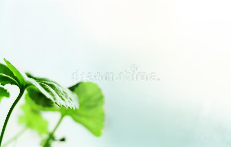 Concetto, sviluppo di affari, crescita, muovendosi in avanti, vincente, risultato di scopo, verde fresco delle foglie della molla fotografia stock