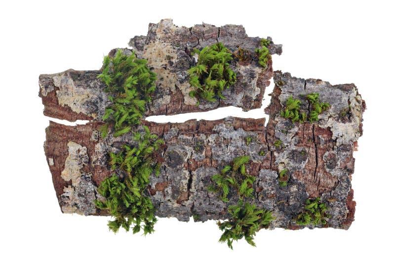 Concetto tropicale di vista superiore dell'isola Su un pezzo di corteccia di una quercia il muschio verde si sviluppa fotografia stock
