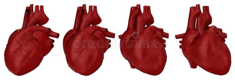 Concetto umano del cuore royalty illustrazione gratis