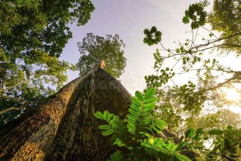 Concetto verde del pianeta, albero gigantesco che raggiunge al cielo immagine stock libera da diritti