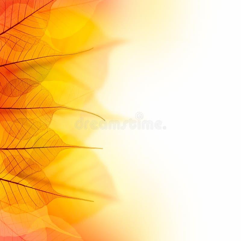 Concevez la frontière des feuilles sèches de couleur d'automne sur le fond blanc photos stock