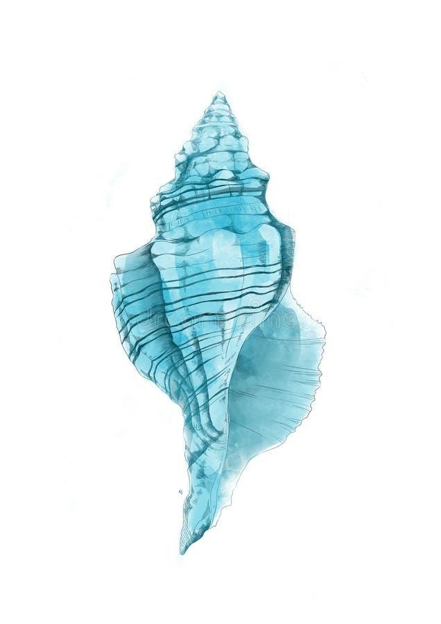 conch vector illustratie