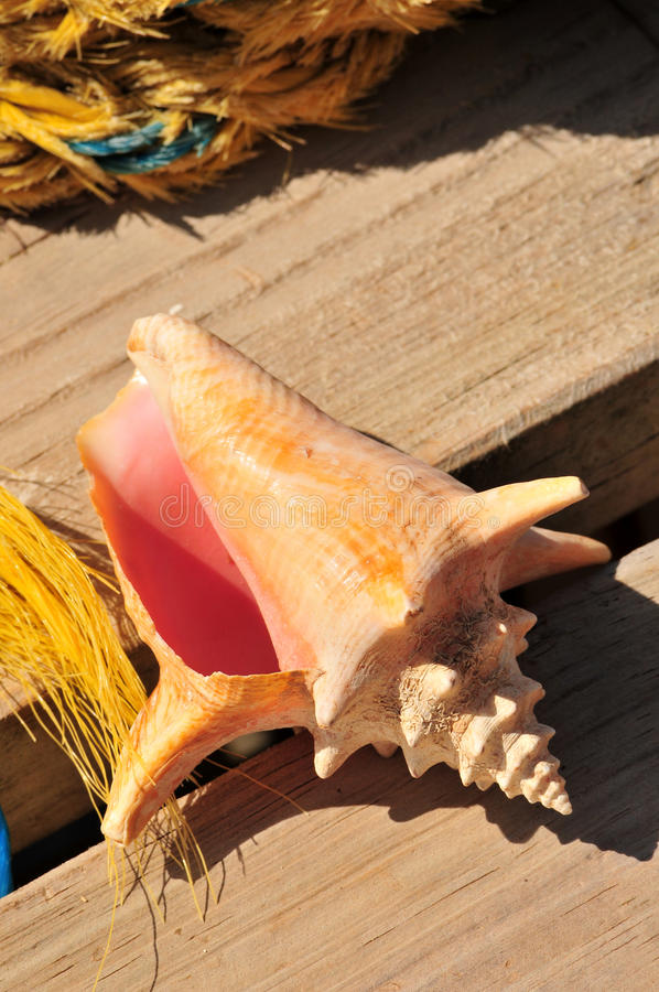 Conch shell on dock royalty free stock photos