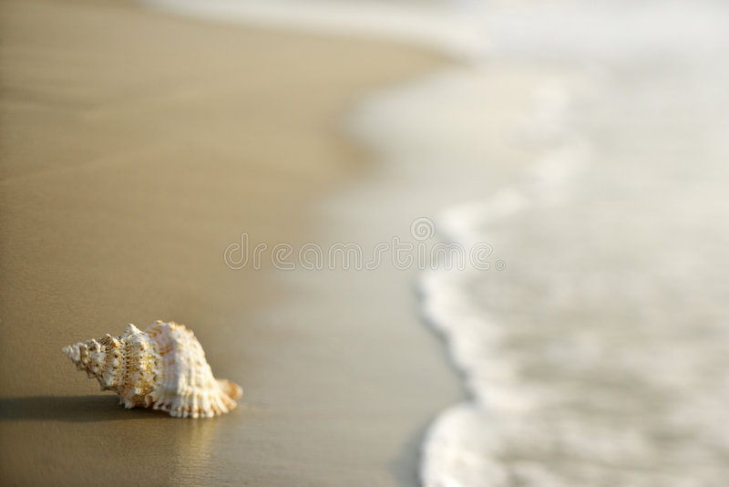 Conch shell on sand with waves. Conch shell on beach with waves royalty free stock photography
