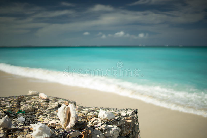 Conch Shell royalty free stock photos