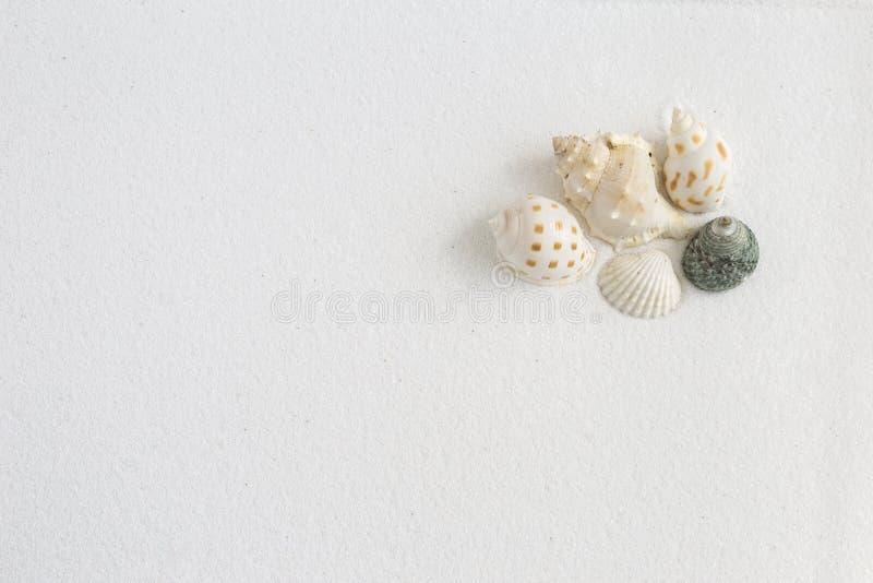 Concha do mar bonita na areia branca fotografia de stock