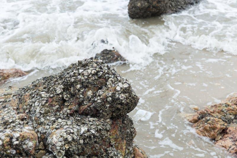 A concha do mar cobriu o recife de pedra imagens de stock