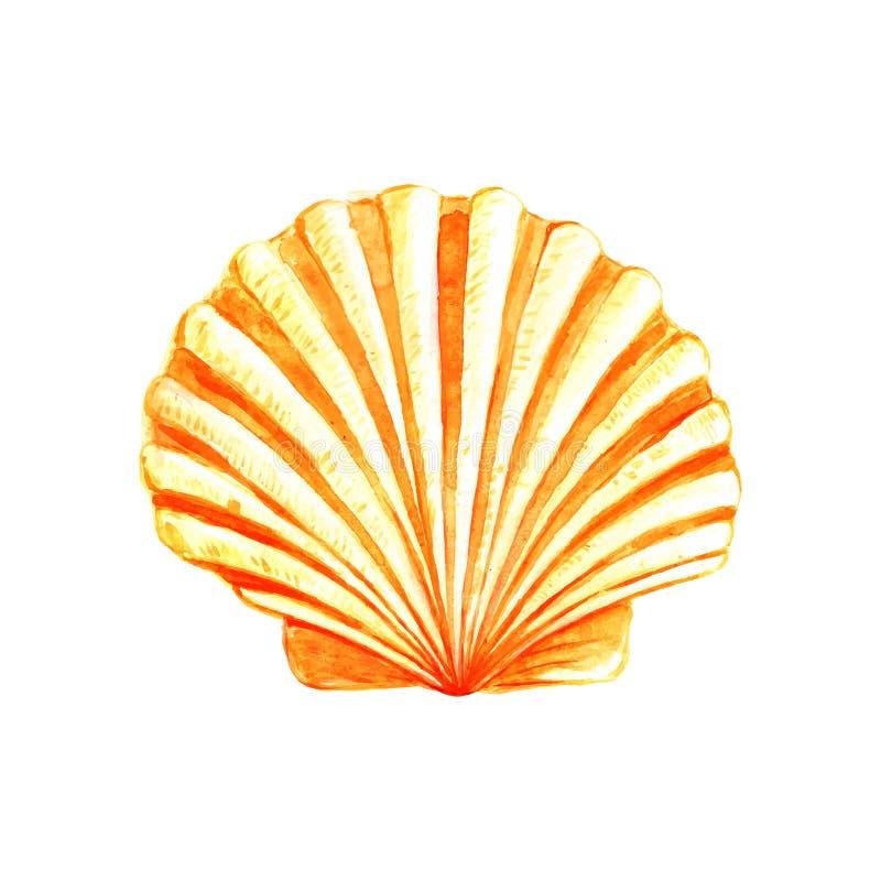 Concha do mar da aquarela ilustração do vetor